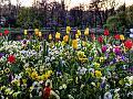 Flori de vară, flori de toamnă