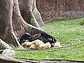 Barcelona Zoo #06