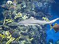 Barcelona Aquarium #04 aka Sharky